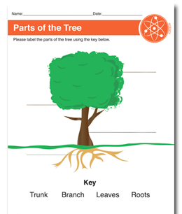 Parts of Tree Printable