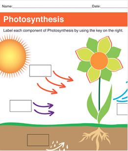 Photosynthesis Printable